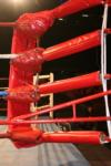 Upcoming Australian Boxing Cards  15/10/2009